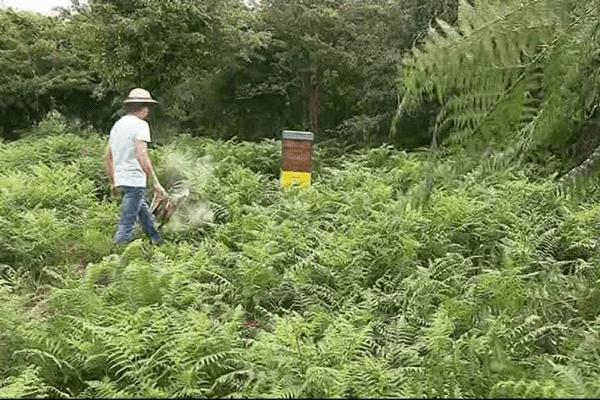 Sur ses 20 ruches installées près du Cap Fréhel, les voleurs n'en ont épargné qu'une…