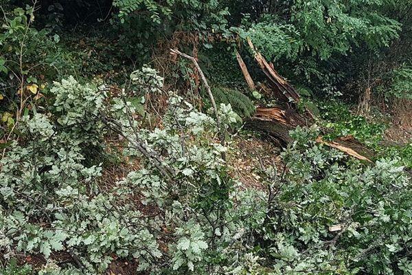 Des arbres sont tombés dans le secteur de Baurech en Gironde touché par les orages mardi 11 août dans la soirée.
