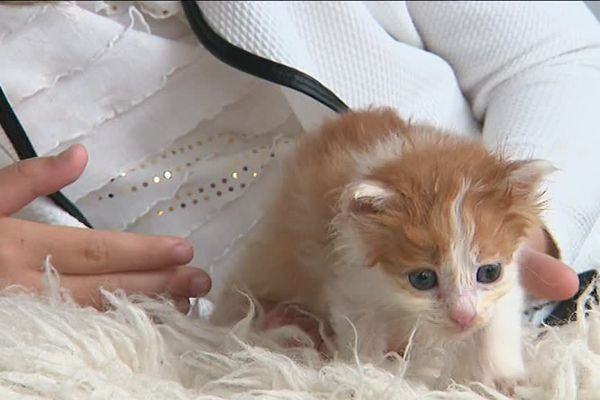 Un petit chaton à adopter