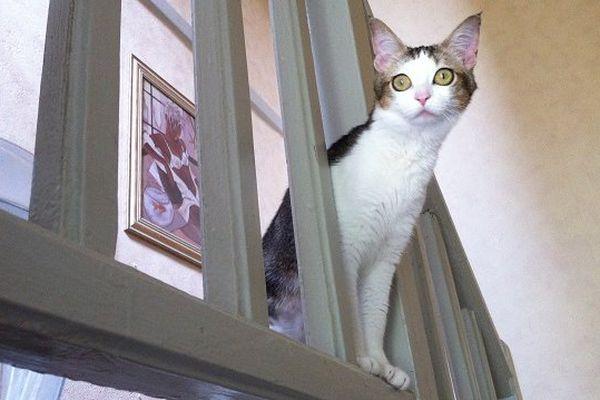 chat arabe sans inscription