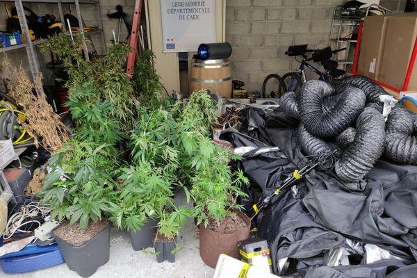 Un trafic de cannabis démonté à Colleville Montgommery