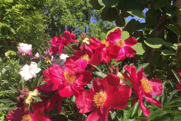 Le parc de l'Arquebuse fête la nature et la biodiversité le dimanche 27 mai.