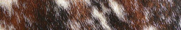 détail d'une robe bringée