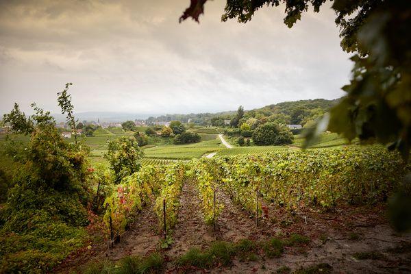 """Le vignoble champenois et ses paysages très variés seront au coeur des décors du film """"Champagne !"""" de Nicolas Vanier, dont la sortie est prévue en 2022."""