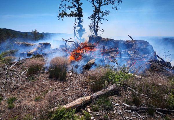 Les flammes ont consumé de la végétation et des déchets de bois.