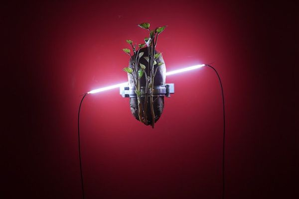 L'oeuvre Reborn Tree s'inscrit parfaitement dans la thématique de l'éternité à l'honneur cette année. L'artiste Chih-Wei Chuang observe la relation entre les êtres vivants et les objets inanimés.