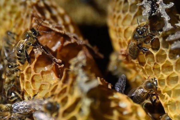 20 000 ruches ont été décimées en Bretagne