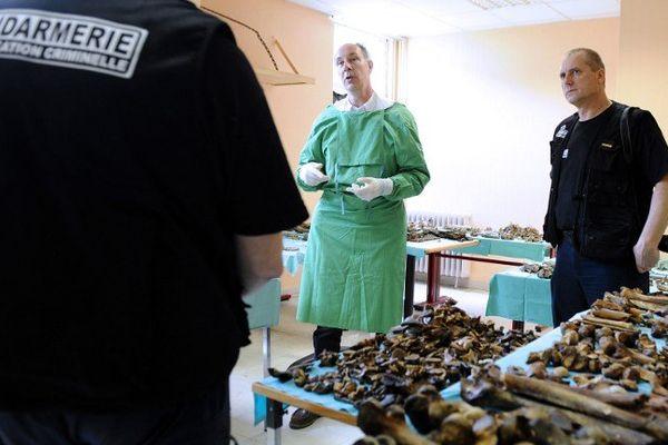 Une découverte rare à Verdun où les os racontent une histoire