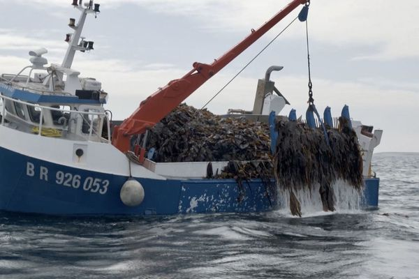 L'extraction des algues en mer