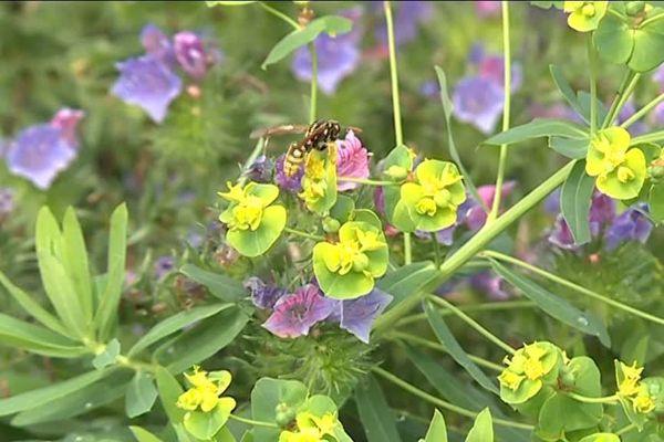 Le jardin Hymenoptera, aménagé pour attirer les insectes autochtones