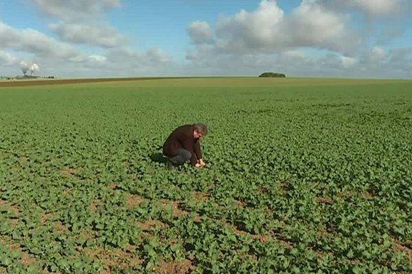 A partir de 2018, les agriculteurs ne bénéficieront plus des aides au maintien dans l'agriculture bio. L'Etat se désengage en effet du dispositif de cofinancement européen.