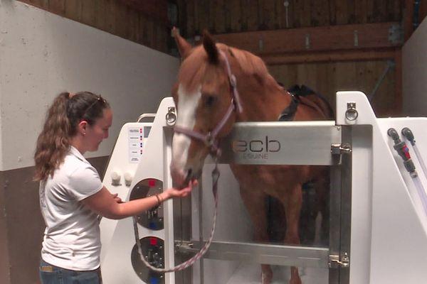 Soins de balnéothérapie pour une cheval dans une écurie de Saint-Martin Osmonville (Seine-Maritime)