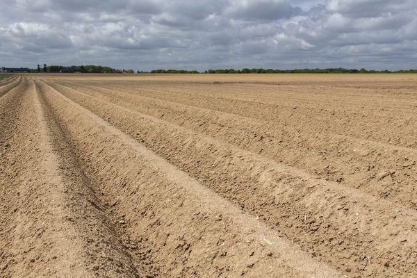Une parcelle de pommes de terre dans la Somme (photo d'illustration).