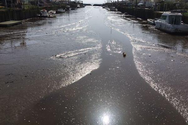 Le port ostréicole d'Arès, sur le bassin d'Arcachon, est envahi par les boues vaseuses.