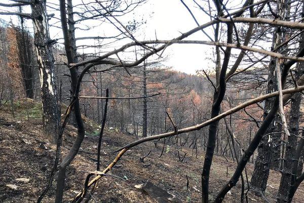 Sur les hauteurs de la commune de Monze près de Carcassonne, les stigmates de l'incendie sont toujours visibles.