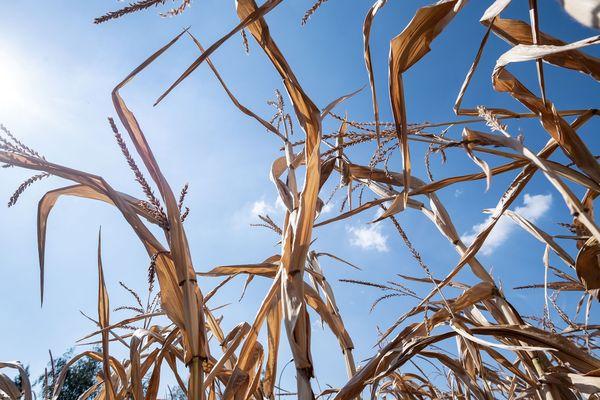 Mardi 9 juillet, la préfecture du Cantal a mis en place des restrictions d'eau dans le département en raison de la sécheresse.