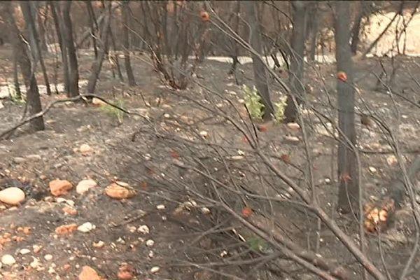 Carros, presque deux mois après l'incendie qui a ravagé 90 hectares