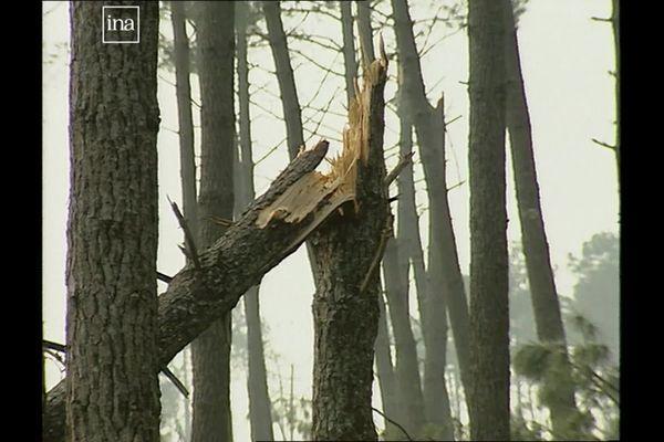 Capture d'images des dégâts causés par la tempête Martin le 28 décembre 1999, dans le Médoc, en Gironde.