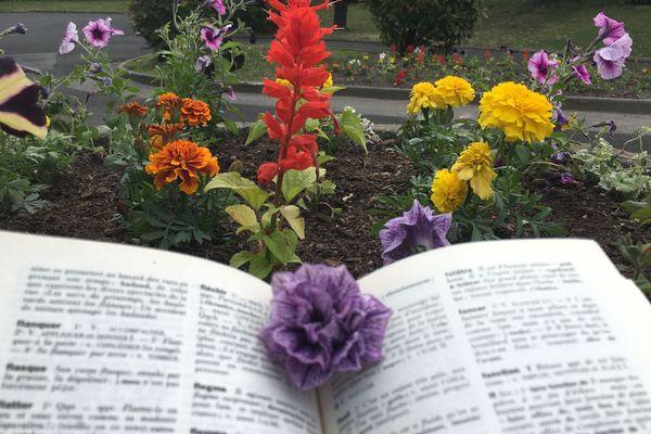 Les fleurs permettent de délivrer un message. Mais lequel ? Testez vos connaissances !
