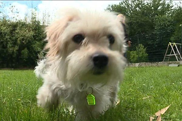 Choupette a été placée en famille d'accueil le temps d'être adoptée.