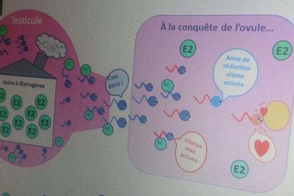 """@normandieuniv - Pour la finale régionale MT180 Normandie, Camille Gautier a illustré avec beaucoup d'humour sa thèse sur le thème de """"la production et la qualité des spermatozoïdes équins"""""""