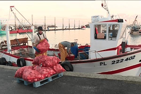 La débarque des pêcheurs de coquilles Saint-Jacques à Saint-Quay-Portrieux (22)