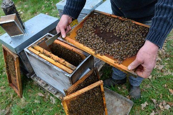 Grâce à Beeguard, le comportement des abeilles est observable à distance presque en temps réel