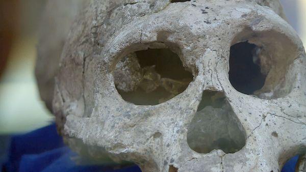 L'un des tous premier Homo des temps moderne, l'un des tous premiers à fabriquer des outils et à les améliorer, signe caractéristique de notre race