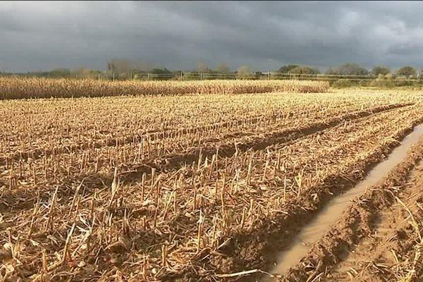 Les pluies ont des conséquences sur le travail des agriculteurs qui voient leurs champs gorgés d'eau