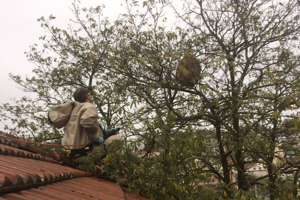 Le nid dans l'arbre.