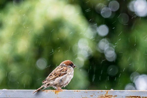 Pluie, pluie pluie