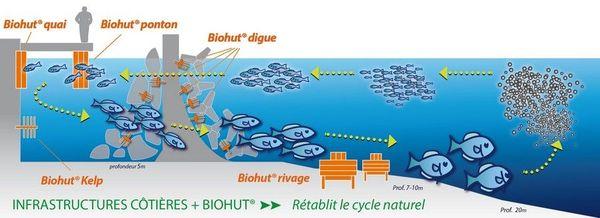 Principe de fonctionnement du projet Biohut