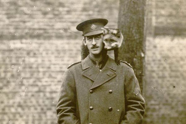 Un officier britannique et son renard de compagnie basé à Abbeville dans la Somme.