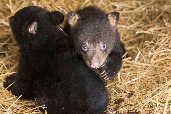 Les deux oursons se nomment Dakota et Carolina.