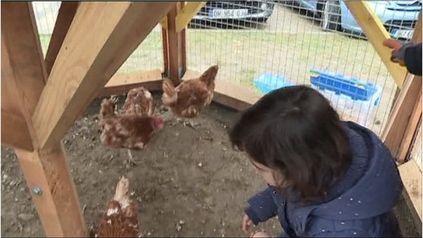 Cocott'arium est une entreprise d'économie sociale et solidaire qui propose de mettre des poules en ville pour éduquer, recycler et partager.
