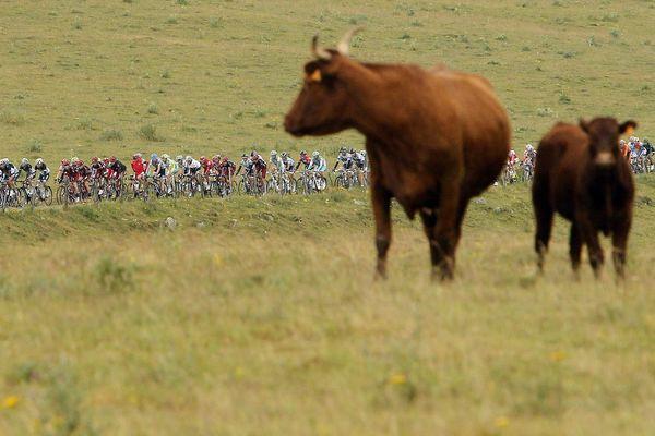 Comme sur cette photo de l'étape de 2011 entre Issoire et Saint-Flour, le Tour de France devrait retrouver le sud de l'Auvergne en 2019 ...