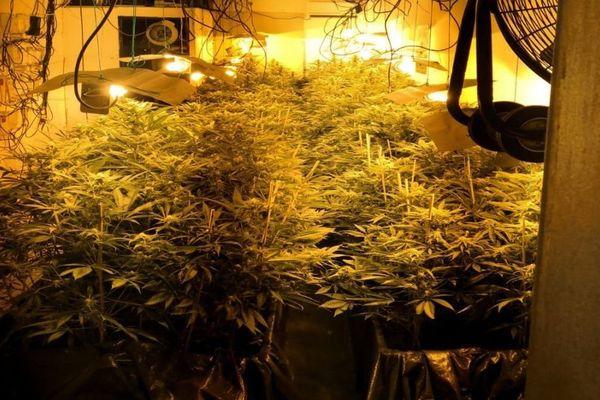 Perpignan - 2 sites de culture de cannabis découverts par la police à la cité Bellus - 2019.
