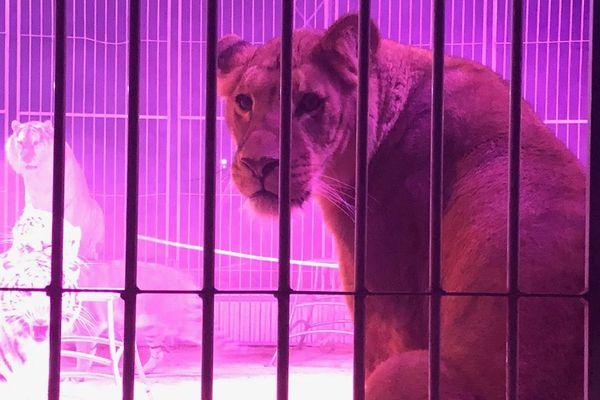 L'association Zoopolis manifestait à Châlons-en-Champagne samedi 22 février pour demander l'interdiction des animaux dans les cirques