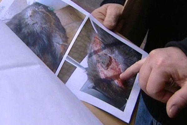 En août 2012, deux jeunes de 10 et 11 ans avaient brûlé vif un chat à Talant, dans l'agglomération dijonnaise.