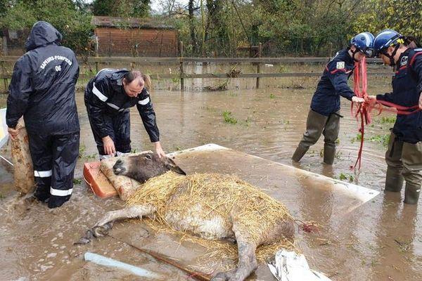 Laurette et Pâquerette, deux ânes fatigués par la montée des eaux à la Roquette sur Siagne sauvés par le SDIS 06.