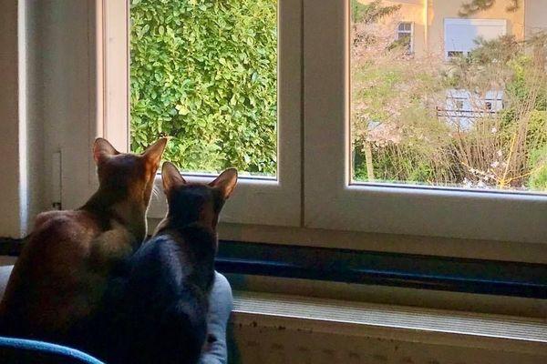 A leur fenêtre, Onès et Choco surveillent si le confinement est respecté.