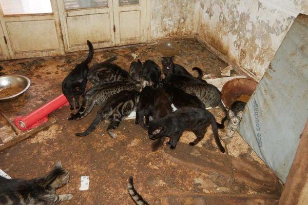 23 chats affamés découverts dans un appartement du boulevard de la Madeleine à Nice