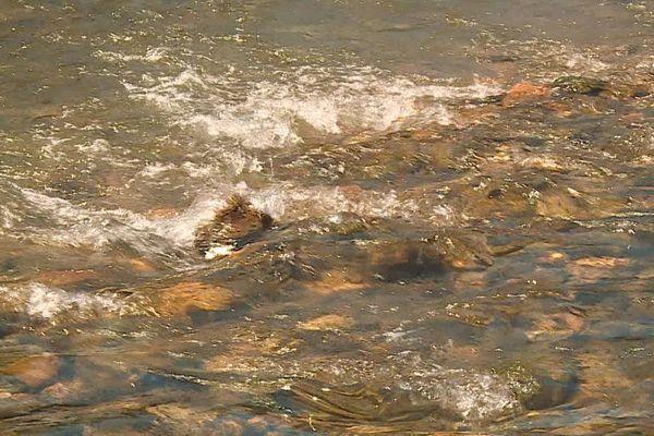 L'eau du Verdouble, la rivière qui jouxte le village de Tautavel et qui l'alimente en eau est polluée aux pesticides.