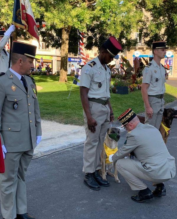 Lors de la cérémonie, deux chiens du régiment cynophile de Suippes ont été récompensés
