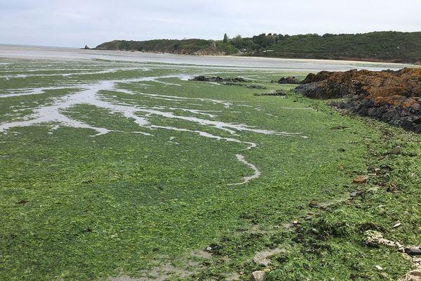 Algues vertes dans les Côtes d'Armor