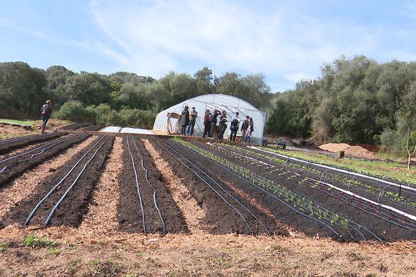 La parcelle de 2 hectares, située à Ajaccio, doit être partagée par 4 agriculteurs pour une durée d'un à trois ans.