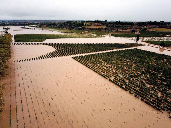 Des vignes inondées à Saint Couat d'Aude. (octobre 2015)
