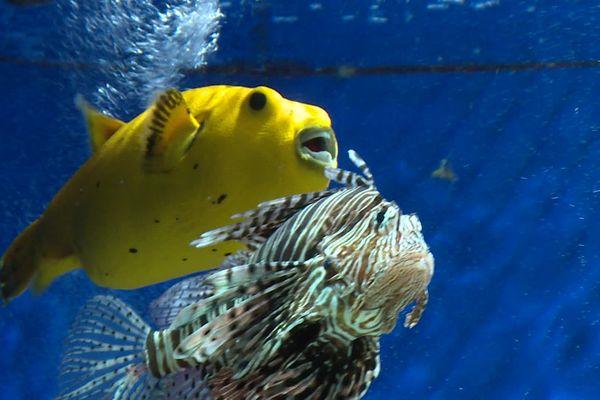 Des poissons qui ont besoin de lumière.