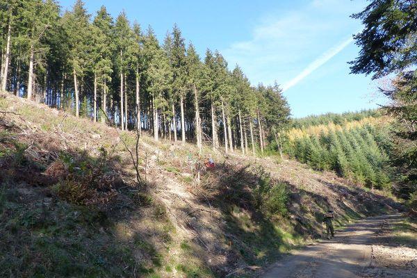 Les travaux sont sur le point de se terminer sur cette parcelle de la Forêt de la Pyramide (Rhône).