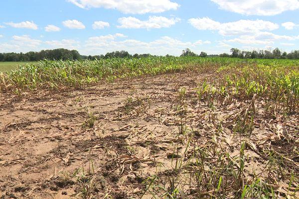 Des champs très endommagés par les intempéries des derniers mois